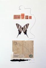 Zebra Swallowtail Butterfly Jeri Hillisrev2web