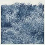 """Ditch Grasses"""