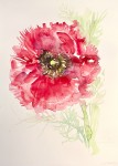 """Red Ranunculus 4″"