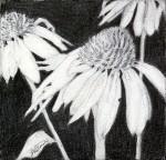 """Cone Flowers 2″"