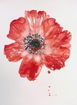 """""""Red Anemone 3″"""
