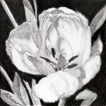 """""""Tulip 2″"""
