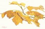 """Fall Tulip Poplar (Detail)"""