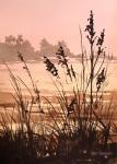 """""""Evening Grass"""""""
