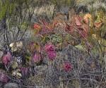 """Red Nopal Cacti"""